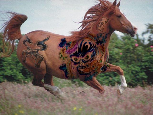 comenius_horse1.jpg