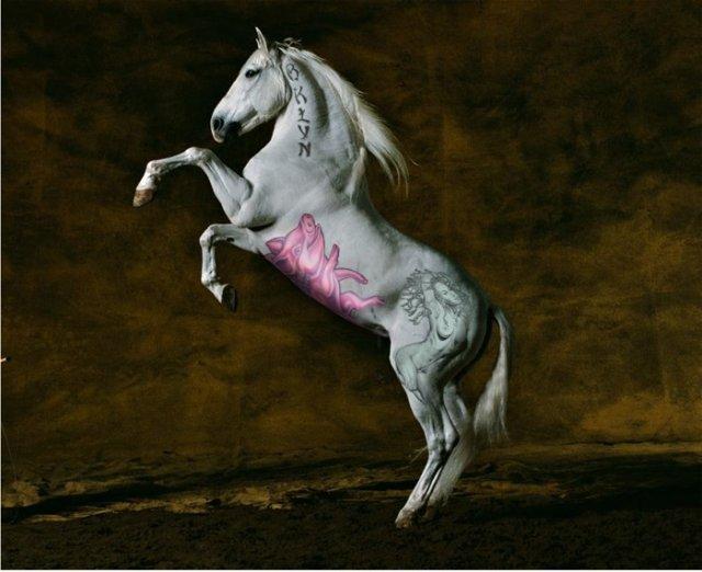 comenius_horse3.jpg