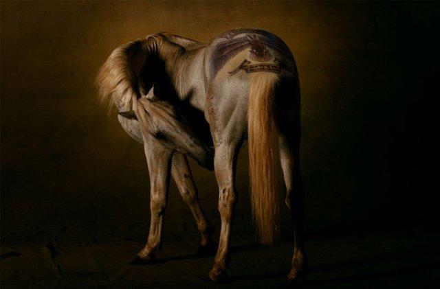 comenius_horse4.jpg
