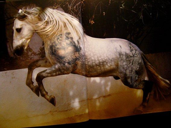 horse54.jpg
